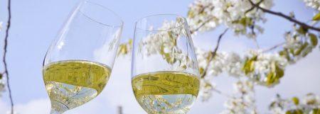 Weintour Weinviertel – Biowein Weber